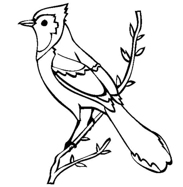 Beautiful Blue Jay Bird Coloring Page: Beautiful Blue Jay ...
