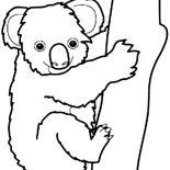 Koala Bear, Australian Koala Bear Coloring Page: Australian Koala Bear Coloring Page