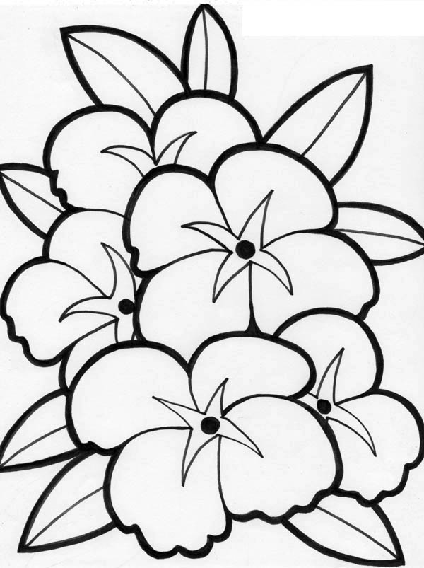 Hibiscus Flower, : Beautiful Picture of Flower Coloring Page