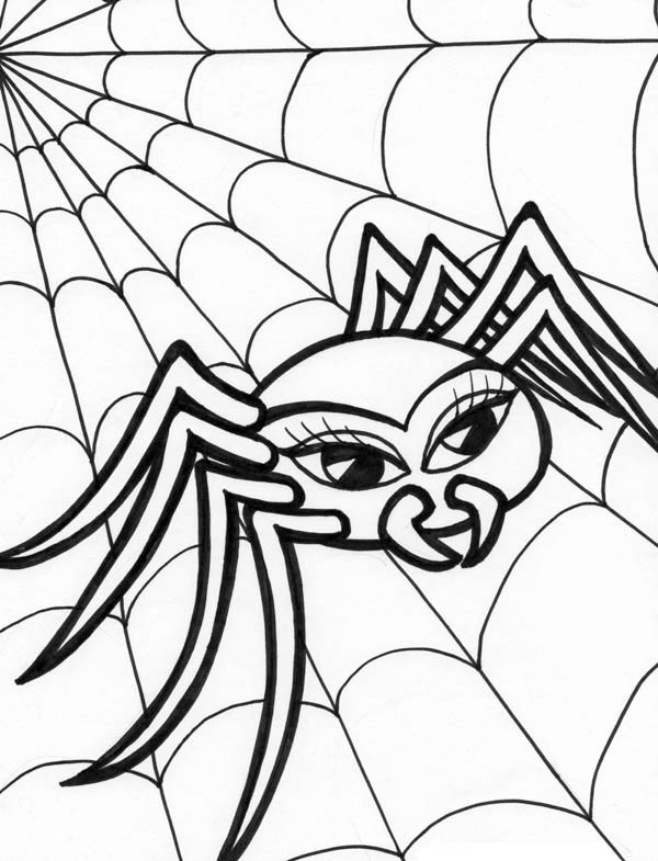 Spider, : Beautiful Spider Walking on Spider Web Coloring Page
