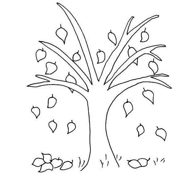 Fall Leaf, : Beech Tree Fall Leaf Coloring Page