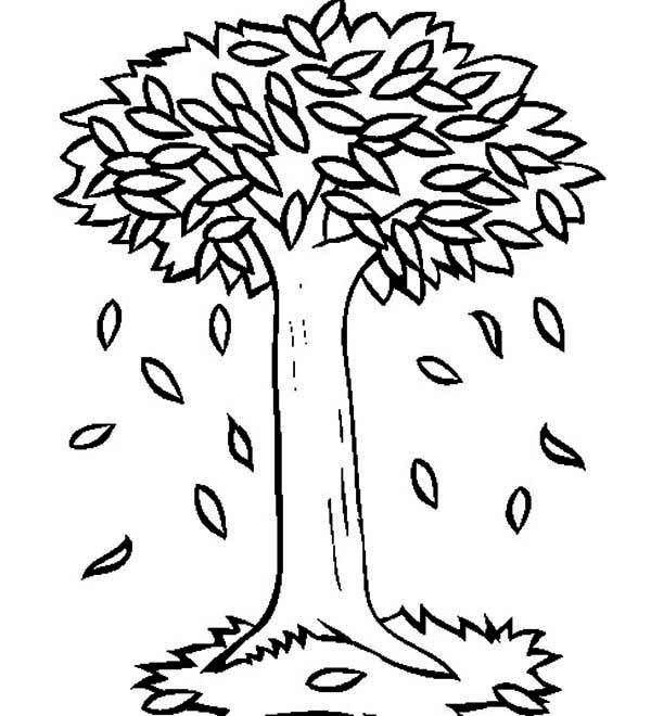 Fall Leaf, : Big Trees in Autumn with Fall Leaf Coloring Page