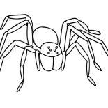 Spider, Creepy Tarantula Spider Coloring Page: Creepy Tarantula Spider Coloring Page