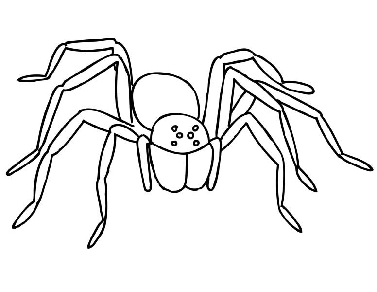 Spider, : Creepy Tarantula Spider Coloring Page