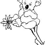 Koala Bear, Cute Little Koala Bear Coloring Page: Cute Little Koala Bear Coloring Page