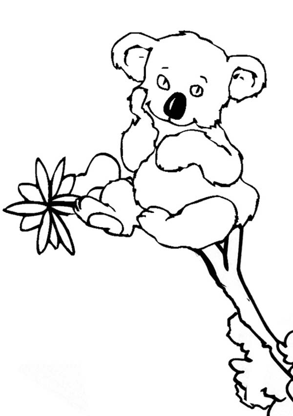 Koala Bear, : Cute Little Koala Bear Coloring Page
