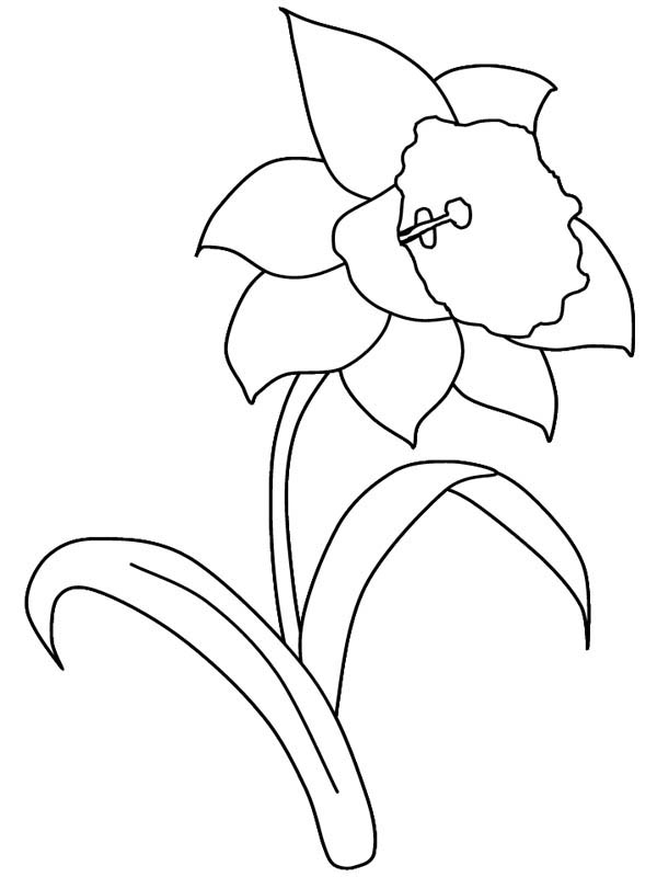 Hibiscus Flower, : Daffodil Flower in the Garden Coloring Page