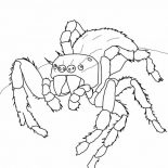 Spider, Daring Jumping Spider Coloring Page: Daring Jumping Spider Coloring Page