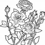 Flower Bouquet, Elegant Roses For Beautiful Flower Bouquet Coloring Page: Elegant Roses for Beautiful Flower Bouquet Coloring Page