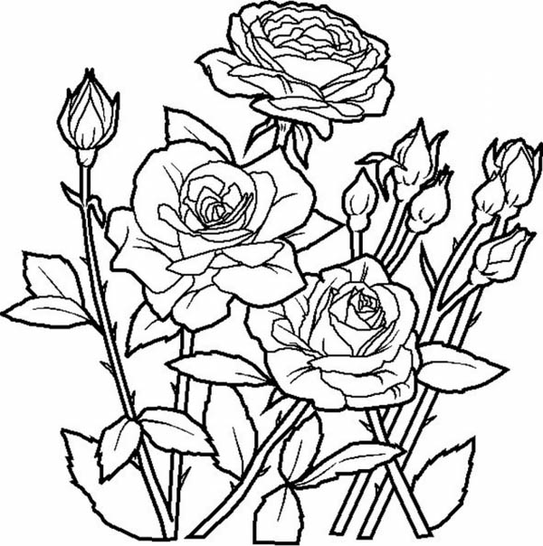 Flower Bouquet, : Elegant Roses for Beautiful Flower Bouquet Coloring Page