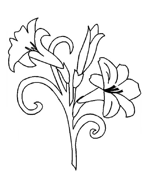 Flower Bouquet, : Flower Bouquet Picture Coloring Page