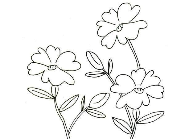 Hibiscus Flower, : Flower in My Garden Coloring Page