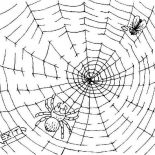 Spider, Fly Trapped On Spider Web Coloring Page: Fly Trapped on Spider Web Coloring Page