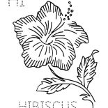 Hibiscus Flower, H Is Fro Hibiscus Flower Coloring Page: H is fro Hibiscus Flower Coloring Page