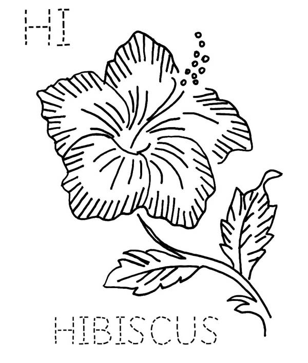 Hibiscus Flower, : H is fro Hibiscus Flower Coloring Page