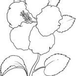 Hibiscus Flower, Hawaii State Flower Is Hibiscus Flower Coloring Page: Hawaii State Flower is Hibiscus Flower Coloring Page