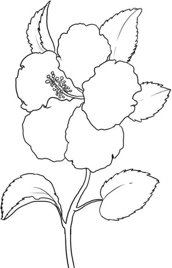 Hibiscus Flower, : Hawaii State Flower is Hibiscus Flower Coloring Page