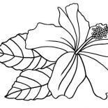 Hibiscus Flower, Hawaiin Hibiscus Flower Coloring Page: Hawaiin Hibiscus Flower Coloring Page