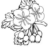 Hibiscus Flower, Hawthorn Flower Coloring Page: Hawthorn Flower Coloring Page