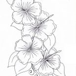 Hibiscus Flower, Hibiscus Flower Drawing Coloring Page: Hibiscus Flower Drawing Coloring Page