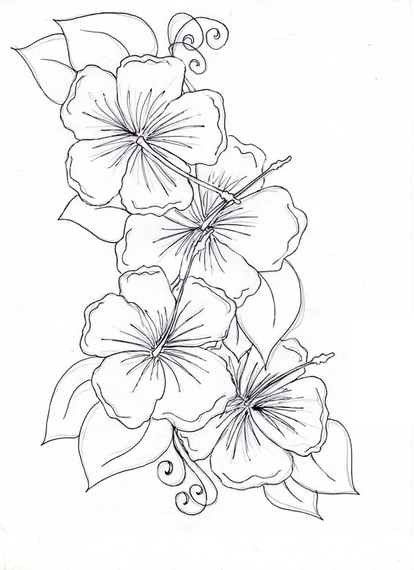 Hibiscus Flower, : Hibiscus Flower Drawing Coloring Page