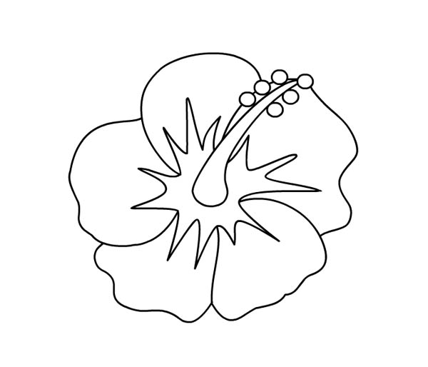 Hibiscus Flower, : Hibiscus Flower Picture Coloring Page