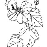 Hibiscus Flower, Hibiscus Flower For Flower Arrangement Coloring Page: Hibiscus Flower for Flower Arrangement Coloring Page