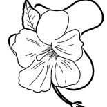 Hibiscus Flower, Hibiscus Flower In Blossom Coloring Page: Hibiscus Flower in Blossom Coloring Page