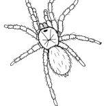Spider, Hideous Tarantula Coloring Page: Hideous Tarantula Coloring Page