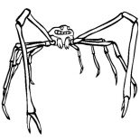 Spider, Japanese Spider Crab Coloring Page: Japanese Spider Crab Coloring Page