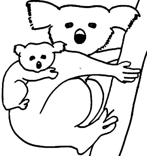 Koala Bear, : Koala Bear Carrying Her Baby Coloring Page