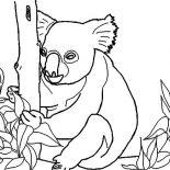 Koala Bear, Koala Bear Collecting Food Coloring Page: Koala Bear Collecting Food Coloring Page