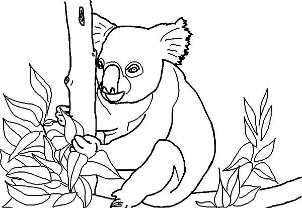 Koala Bear, : Koala Bear Collecting Food Coloring Page