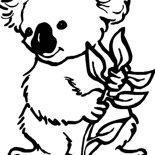 Koala Bear, Koala Bear Coloring Page: Koala Bear Coloring Page