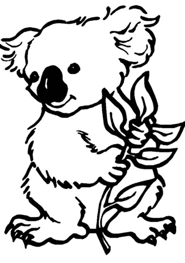 Koala Bear, : Koala Bear Coloring Page