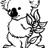 Koala Bear, Koala Bear Eating Eucalyptus Coloring Page: Koala Bear Eating Eucalyptus Coloring Page