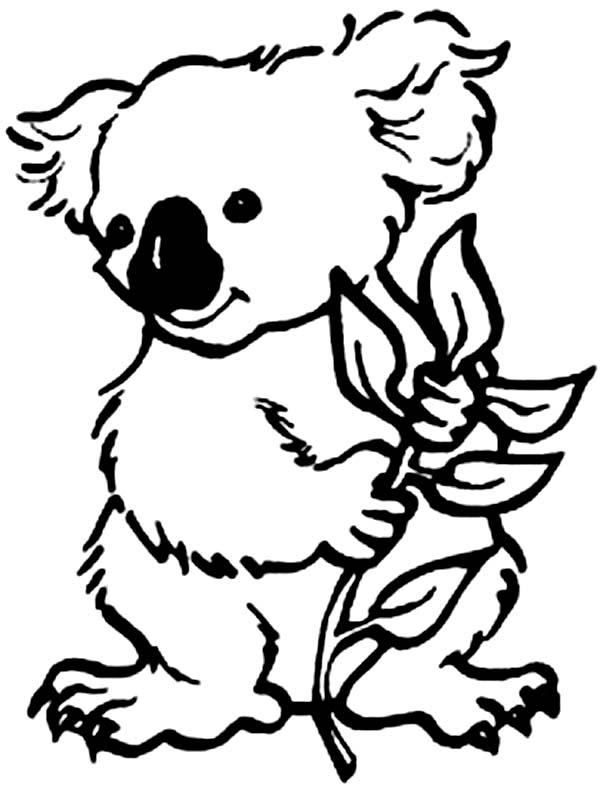 Koala Bear, : Koala Bear Eating Eucalyptus Coloring Page