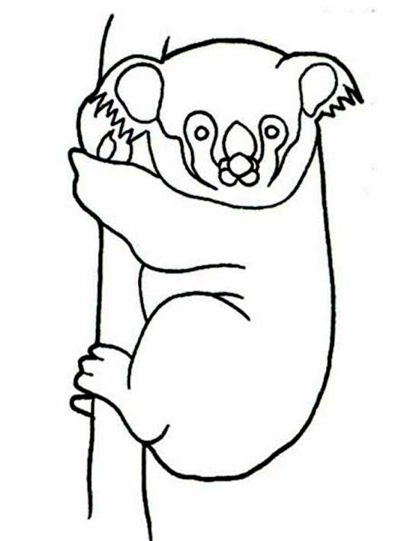 Koala Bear, : Koala Bear Hanging on Tree Coloring Page