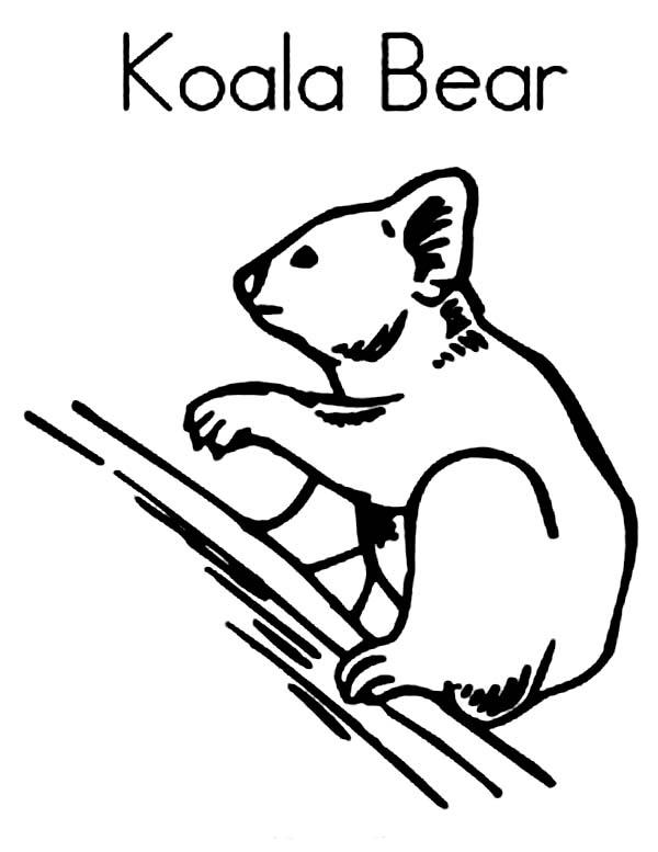 Koala Bear, : Koala Bear Image Coloring Page