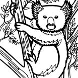Koala Bear, Koala Bear Looks Like Wolverine Coloring Page: Koala Bear Looks Like Wolverine Coloring Page
