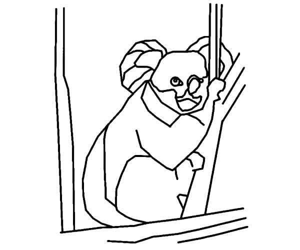 Koala Bear, : Koala Bear Outline Coloring Page