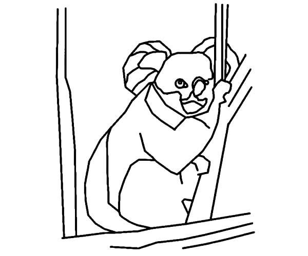 Koala Bear, : Koala Bear Outline Coloring Page