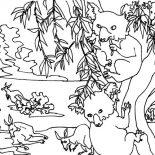 Koala Bear, Koala Bear Picture Coloring Page: Koala Bear Picture Coloring Page