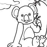 Koala Bear, Koala Bear Sitting Coloring Page: Koala Bear Sitting Coloring Page