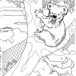 Koala Bear, Koala Bear In A Zoo Coloring Page: Koala Bear in a Zoo Coloring Page
