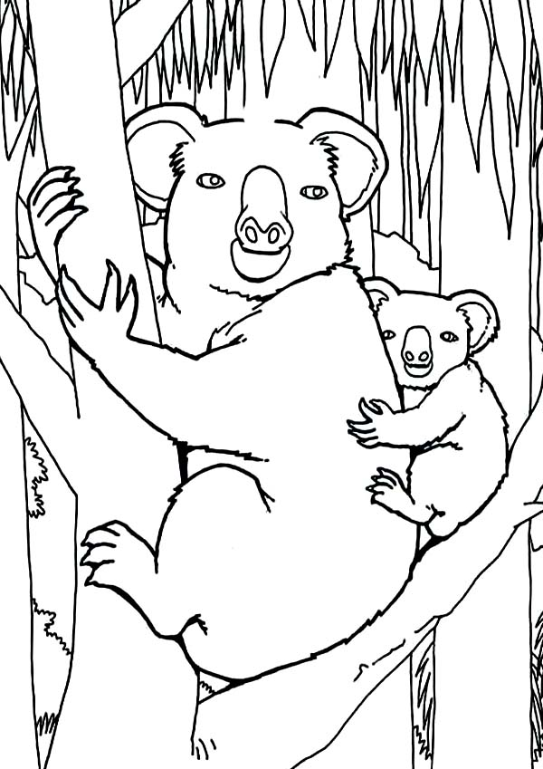 Koala Bear In The Jungle Coloring Page Color Luna