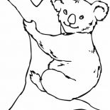 Koala Bear, Koala Bear On Big Tree Coloring Page: Koala Bear on Big Tree Coloring Page