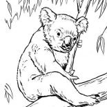 Koala Bear, Koala Bear On Eucalyptus Tree Coloring Page: Koala Bear on Eucalyptus Tree Coloring Page