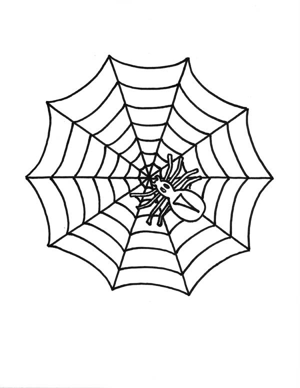 Spider, : Little Spider on Spider Web Coloring Page