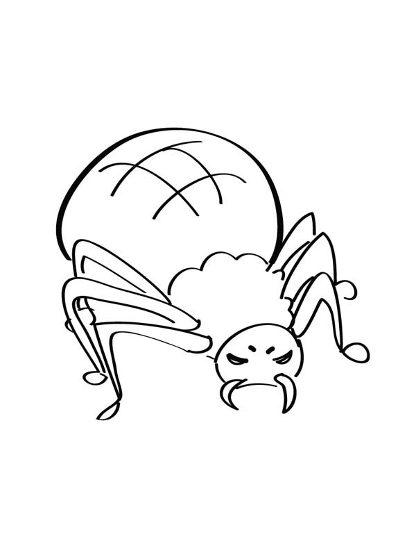 Spider, : Mean Spider with Poisonous Canine Coloring Page